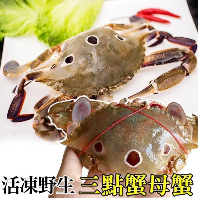 活凍野生三點母蟹【海陸管家】