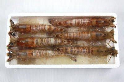 【萬象極品】班節蝦(明蝦)6尾/約450g~頂級海鮮食材~絕對挑動您的味蕾~