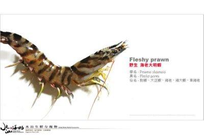 【水汕海物】西南外海 野生海洋撈捕 海老大明蝦 ( 7P 500g )。『實體店面、品質保證』