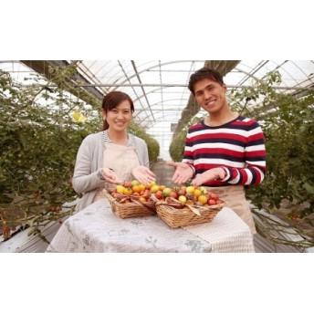 まるでトマトの宝石箱!フルーツジュエリートマト H004-023