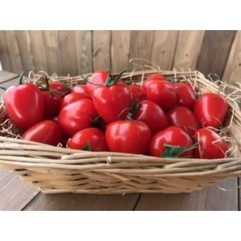 甘さ抜群!!トマト嫌いも食べられるトマトベリー約1.6kg H004-029