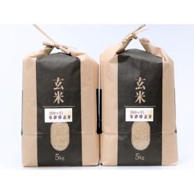 平成30年産「さがびより(玄米)」 10kg(5kg×2)