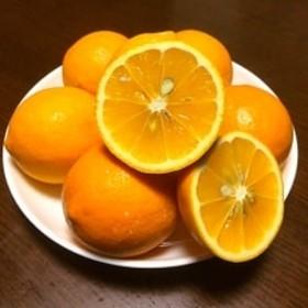 主井農園の国産レモン (5Kg 赤秀)
