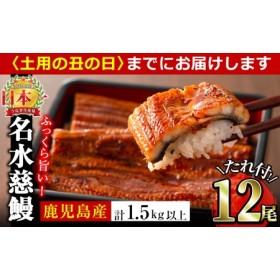 鹿児島県産うなぎ蒲焼名水慈鰻 12尾