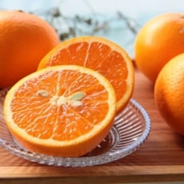 主井農園・高級清見オレンジ(約5kg)