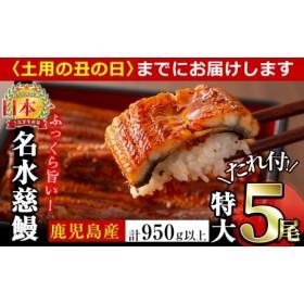 鹿児島県産うなぎ蒲焼名水慈鰻 特大5尾