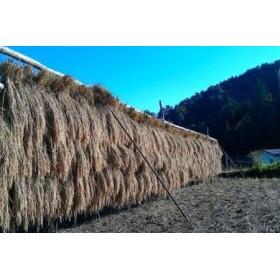 《事前予約制》コシヒカリ 8kg 飛騨産 若手農家のこだわりのお米[B0048]