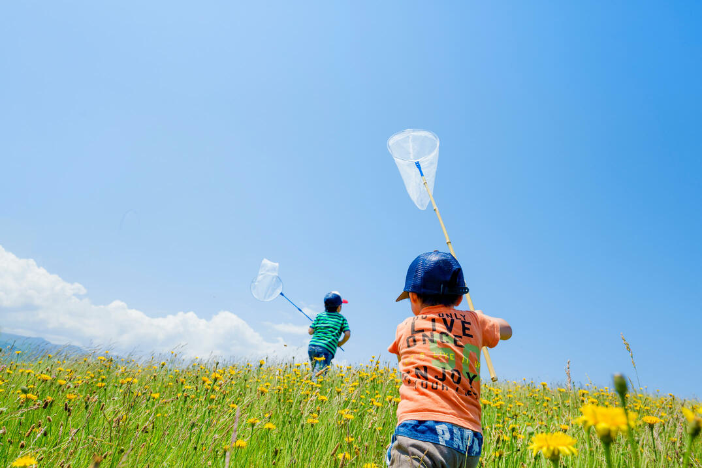 青空の下に広がる草原で昆虫採集