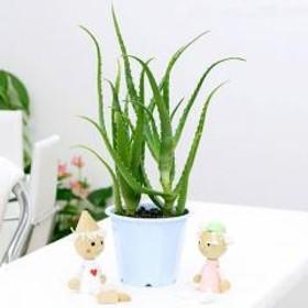 (観葉植物)アロエ こだわりキダチアロエ(有機栽培・無農薬) 5号(1鉢) 北海道冬季発送不可