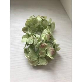 紫陽花 ドライフラワー 花材