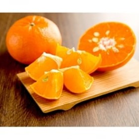 香り高い柑橘 【麗紅】約4kg