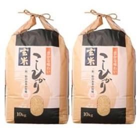 令和元年産 石川県能登産こしひかり 玄米20kg(10kg×2袋)