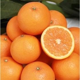 「有田産」【産地直送】清見オレンジ 約7kg(S~4Lサイズ) 紀州グルメ市場