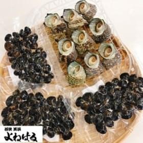素潜り活サザエ(ボイル済)&汽水湖のシジミ【冷凍】