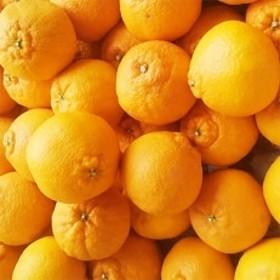 和歌山産 春柑橘こだわりの不知火 ご家庭用 約4kg