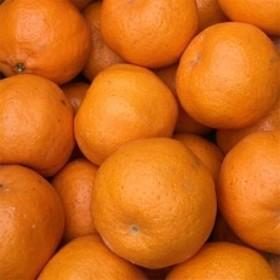 春柑橘こだわりのポンカン和歌山産 約5kg