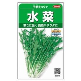 サカタのタネ 千筋京菜水菜