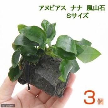 (水草)アヌビアスナナ 風山石 Sサイズ(3個)