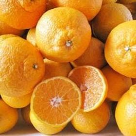 柑橘の王様を極める 高糖度 完熟 不知火約5kg