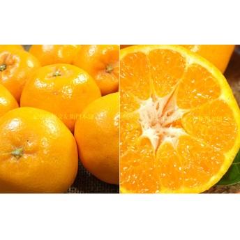 はるみ[約2.8kg]和歌山県産 春みかん(はるみ 和歌山県産春みかん春柑橘 (果実サイズおまかせ))