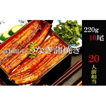 高知県産 うなぎ蒲焼き220g 10尾セット