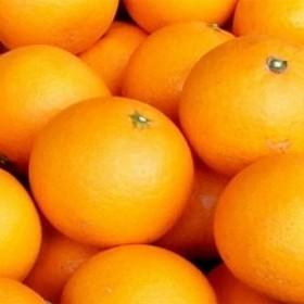 清見オレンジ[約6kg]湯浅町田村産(果実サイズおまかせ)/紀伊国屋文左衛門本舗