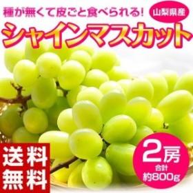 葡萄 ぶどう 山梨県産 シャインマスカット 2房セット(合計 約800g)※常温または冷蔵 送料無料