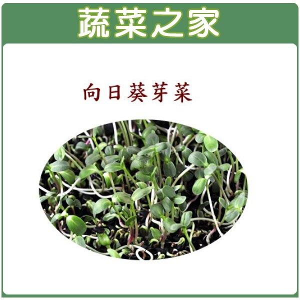 【蔬菜之家】大包裝J08.向日葵300公克(向日葵芽菜種子)
