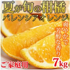 【ご家庭用】希少な国産バレンシアオレンジ 7kg【魚鶴商店】◆◆