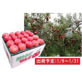 1月 津軽産 家庭用葉取らずサンふじ約10kg