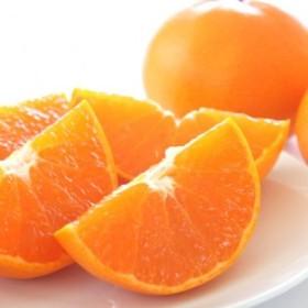 【高級】柑橘の王様 せとか