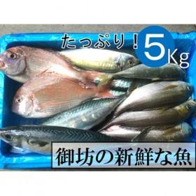 御坊産 鮮魚セット 約5kg