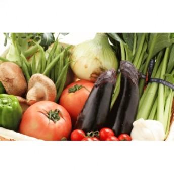 旬の新鮮野菜セット たっぷり15種以上