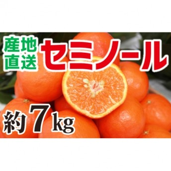 【産地直送】セミノール 約6.5kg(S~3L)