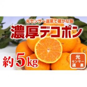 和歌山のデコポン約5kg(15~24玉)サイズおまかせ