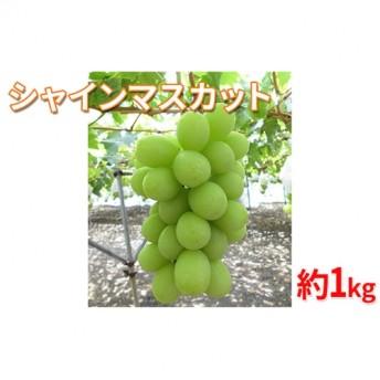 【2019年度産】シャインマスカット1kg