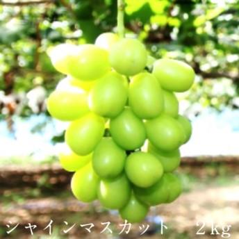 20-JY-7 シャインマスカット 2kg【9月発送】
