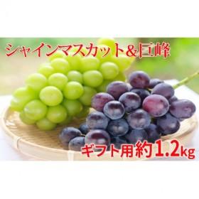 長野市産シャインマスカット&巨峰食べ比べセット約1.2kg(2房)等級Aギフト用