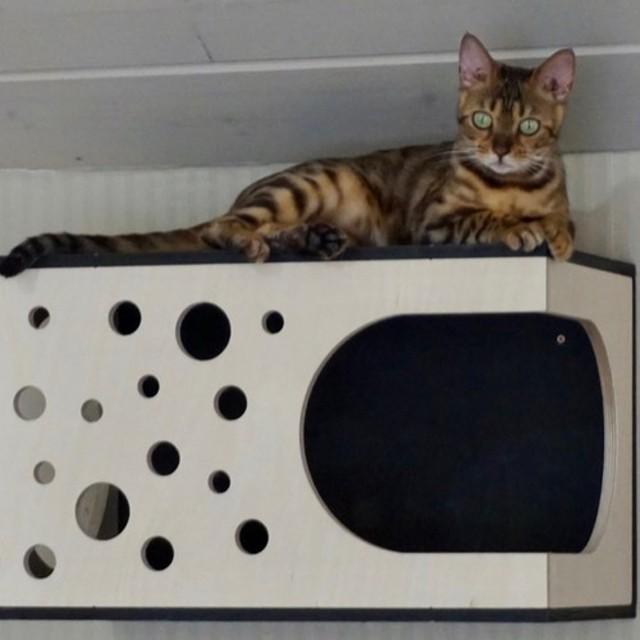 受注製作|水玉模様 壁に取り付けるキャットハウス 猫ベッド