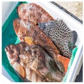 漁師直送 南伊豆地魚セット