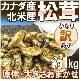 """【送料無料】カナダ・北米産 """"松茸"""" かなり訳あり 約1kg 原体 大きさおまかせ【予約 入荷次第発送】"""