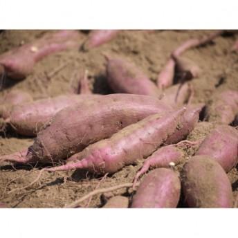 【A14045】鹿児島県産「特選紅樒芋!紅はるか」《先行予約》(約5kg)