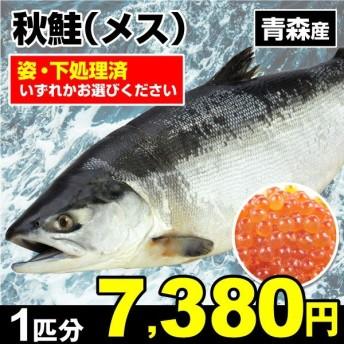 鮭 秋鮭・メス 1尾分 青森産 鮭 鮮魚 「姿」・「下処理済」からお選びください 天然 国華園