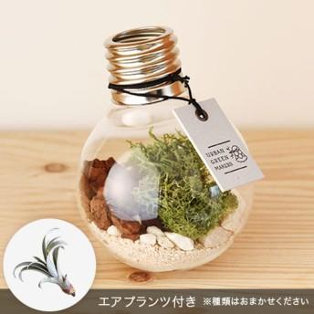 【日比谷花壇】URBAN GREEN MAKERS テラリウムキット「バルブ」