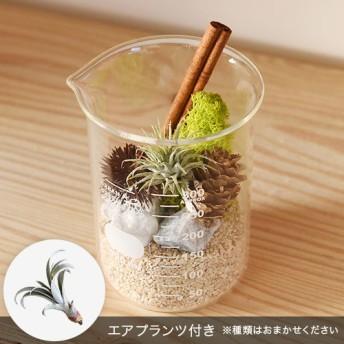 【日比谷花壇】URBAN GREEN MAKERS テラリウムキット「ビーカー」