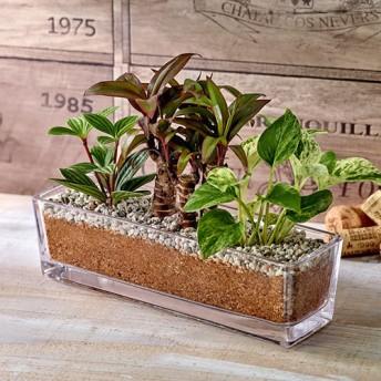 【日比谷花壇】環境にやさしいエコスギ観葉植物「ポトス・コルジリネ・ペペロミア寄せ植え」