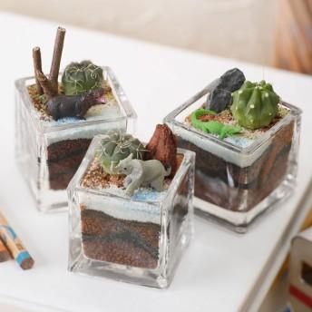 【日比谷花壇】ちいさな植物と一緒に楽しむジオラマ「ナイルのゾウたち」ミニサイズ3個セット