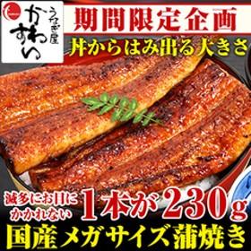 国産 メガサイズ うなぎ蒲焼き 230g ×1本
