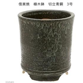 信楽焼 植木鉢 切立青銅 3号 多肉 山野草 雪割草 関東当日便