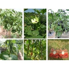 M012◇淡路島産のお米3kg×2、季節の野菜セット(5種類程度)